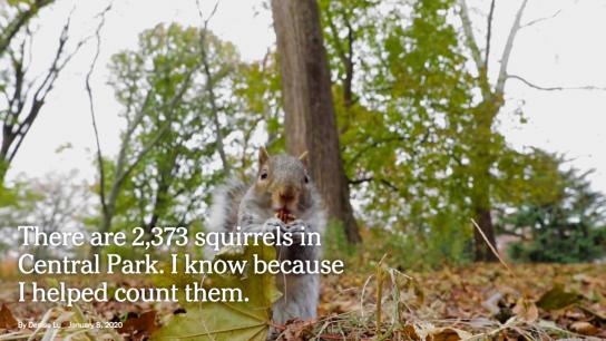 NL 11 01 Contenu qu'on aurait aimé faire ecureuil